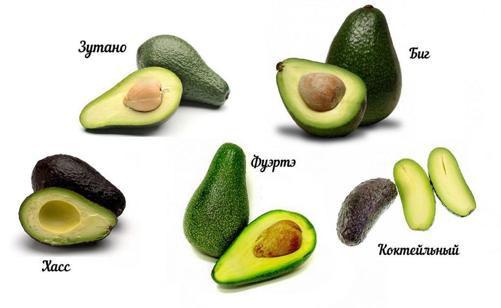 avocado-hass