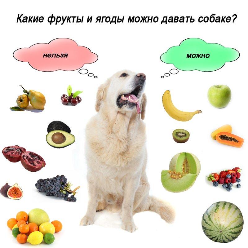 Можно ли собакам авокадо?