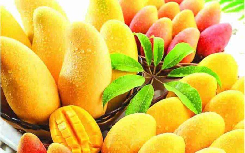 kaloriinost-mango